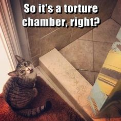 So it's a torture chamber, right? #catoftheday