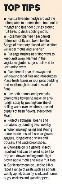 Natural garden tips [my father was an organic vegetable gardner - he used some of these tips]