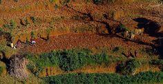 Marina Magro: Work on the fields (Nepal)