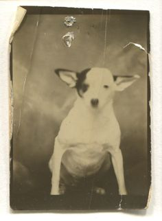 Photographer Unknown Dog in Photo Booth 1940s Vintage Silver Print Snapshot | eBay