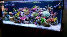Summary: Good aquarium guides for Salt Water Aquarium are not easy to find but I can offer you good ebook to this topic . Saltwater Aquarium Setup, Marine Aquarium Fish, Coral Reef Aquarium, Marine Fish Tanks, Marine Tank, Aquarium Design, Saltwater Tank, Aquarium Ideas, Reef Aquascaping