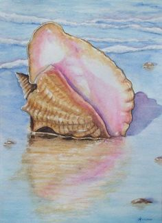 Items similar to Shell Watercolor Print Sea Shore Painting Conch ART Reinecke Summer Ocean Tropical Hawaii Beach on Etsy Watercolor Sea, Watercolour Painting, Painting & Drawing, Stone Painting, Seashell Painting, Painted Shells, Coastal Art, Shell Art, Ocean Art