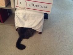 Silly cat!