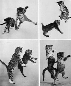 Dance, kittens, dance!