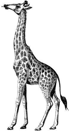 Dover Design Sampler - Wild Animals