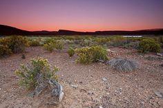 Semi-desert landscape at Sanbona Wildlife Reserve near Cape Town Desert Landscape, Cape Town, Parks, Garden Design, Arizona, Wildlife, Southern, Africa, Around The Worlds