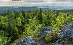 Suuri suunnaton - erämaa Koillismaa  Pyhitystunturi Syötteen kansallispuisto  Finland