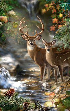 Northwest Art Mall DK Deer Creek Print by Artist Dona Gelsinger, 11 by Deer Photos, Deer Pictures, Jesus Pictures, Kitsch, Deer Wallpaper, Deer Art, Wildlife Art, Modern Artwork, Oil Painting On Canvas