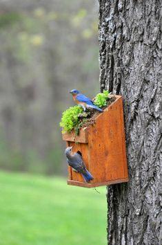 pictureperfectforyou:  Bluebirds (door gardenroofcoop)