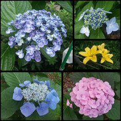 Ueno Park in June flower