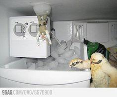 L'Empire contre-attaque dans mon frigo