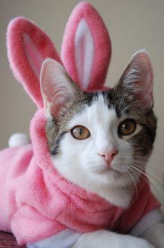 Easter BunnyCat