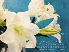 The Valokuvaaja Marjo Tokkari Yo- ja perhepotretit. Tableware, Painting, Art, Art Background, Dinnerware, Tablewares, Painting Art, Kunst, Paintings