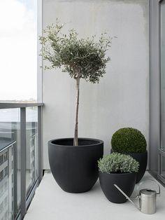 Hemma i Lighthouse (Hitta hem) Balcony Plants, Balcony Garden, Indoor Garden, Indoor Plants, Indoor Flowers, Potted Plants, Outdoor Planters, Garden Planters, Outdoor Gardens
