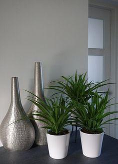 Assortiment overzicht - Air So Pure Chlorophytum, Little Plants, Green Leaves, Planter Pots, Lemon, Indoor, Vase, Pure Products, Home Decor