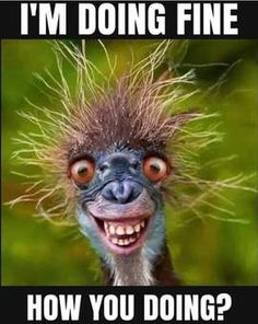 Funny Animal Memes, Funny Animals, Cute Animals, Animal Humor, Funny Cartoons, Funny Jokes, Hilarious, Photo Editing Websites, Old Soul