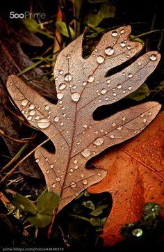 Fall tears by bNYC