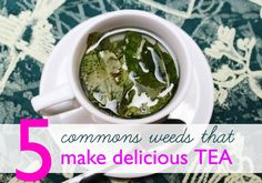 5 Common Weeds You Can Make into Healthy (and FREE!) Teas | Inhabitat New York City