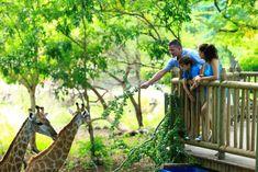 Casela World of Adventures website