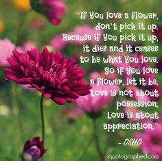 """A Quote by Osho on Love - """"If you love a flower, don't pick it up. Because if you pick it up it dies and it ceases to be what you love. So if you love a flower, let it be. Love is not about possession. Love is about appreciation."""""""