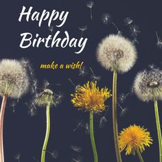 Happy Birthday! make a wish! Click on this image to see the biggest selection of birthday wishes on the net!
