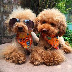 Dog Grooming | Atlrincham | HappyWoofs
