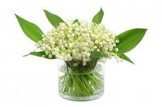 Lily-Of-The-Valley. My absolute favorite flower!
