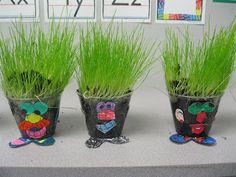 Growing Grass Seeds