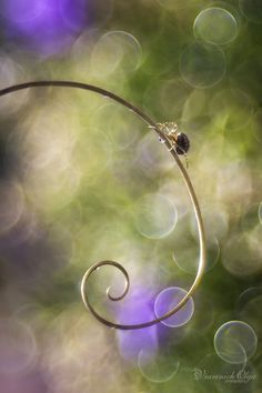 Spider on a curl, bokeh photography @ Olga Viarenich Photography Themes, Bokeh Photography, Jewelry Photography, Lavender Green, Out Of Focus, Happy Paintings, Soft And Gentle, All Nature, Twinkle Lights