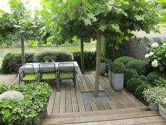 Moderne tuin met houten vlonder en trompetboom, buxus, hortensia en klimop