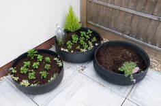 Tyre planters turned inside out. Looks better this way!