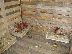 Poulailler intérieur