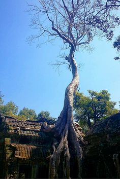 A one-day narrative and guide to Angkor Archaeological Park, Siem Reap, Cambodia. Budget Travel, Travel Tips, Ta Prohm, Siem Reap, Angkor, Temples, Cambodia, Places Ive Been, Attraction