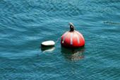 Make Objects Float