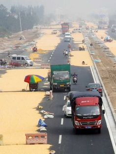 China's Corn Farmers Impound The Pavement - WebEcoist