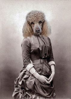 Monique - Vintage Dog 5x7 Print - Anthropomorphic - Altered Photo - Whimsical Art - Photo Collage Art - Poodle Print. $15.00, via Etsy. Love Your Dogs?? Visit our website now! :)