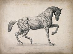 The longtime rider in me says yes.After all, horses look like they are absolutely made for it; not too big and not too small; strong, agile with enough space on their back to carry a human, as they have done for centuries.  However, in addition to being a rider I am also an equine physical therap