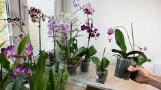 Die 14 Besten Bilder Von Orchideen In 2019 Blumen Pflanzen Und Tipps