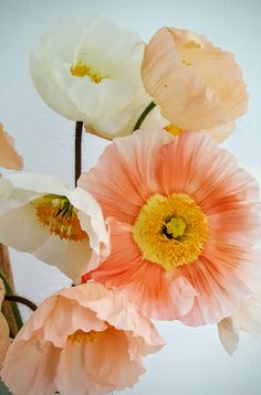 List Of Flowers, Types Of Flowers, Little Flowers, Pretty Flowers, Flowers Nature, Spring Flowers, Paper Flowers Craft, Language Of Flowers, Colorful Plants