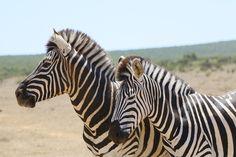 Quer fazer um safari na África? Veja por onde começar: confira dicas para organizar melhor sua viagem e fazer do seu safari uma experiência inesquecível!