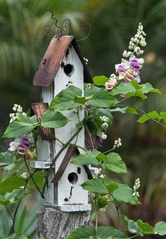Flowering vine wraps around the tin roofed birdhouse complex!