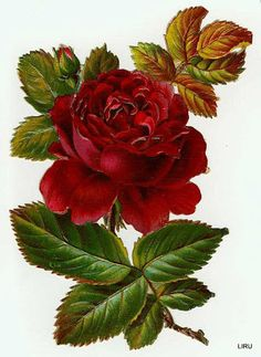 Red rose with bud: www.lilac-n-laven. Victorian Flowers, Vintage Flowers, Red Flowers, Vintage Floral, Red Roses, Beautiful Flowers, Decoupage Vintage, Vintage Diy, Vintage Images