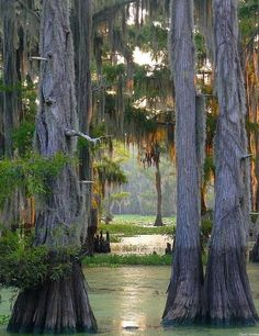 Caddo Lake in Louisiana | Stunning Places #Places