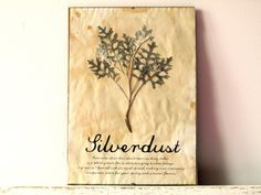 wall decor. pressed herbs.