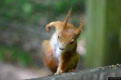 © Blende, Mandy Pollack, sportliches #Eichhörnchen | #squirrel #Tierfotografie #animalphotography