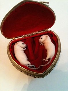 Forget diamonds.... this is what every girl wants!!      Furever Sweethearts Taxidermy Kitten Mice In by PreciousCreature, $155.00