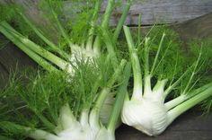 Door deze plant zal je veel minder last hebben van ademhalingsklachten! In de loop van de jaren hebben steeds meer mensen last...