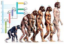 http://www.laltrapagina.it/mag/wp-content/uploads/2016/07/body-Evolution.jpg