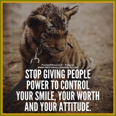 I'd like to tear someone a new one.this is so so wrong. And what in the hell does the abused tiger have to do with the quote.shock value so they read this crap? Strong Quotes, Positive Quotes, Motivational Quotes, Lion Quotes, Tiger Quotes, Favorite Quotes, Best Quotes, Inspirational Message, Good Thoughts