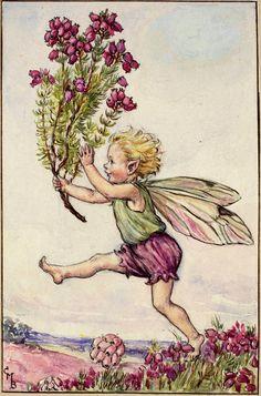The Heather Fairy - Flower Fairies